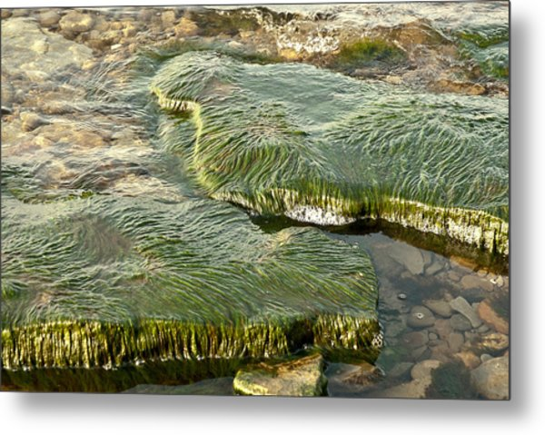 Low Water Algae Metal Print