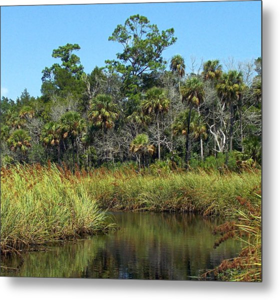 Lower Suwannee Refuge 2a Metal Print