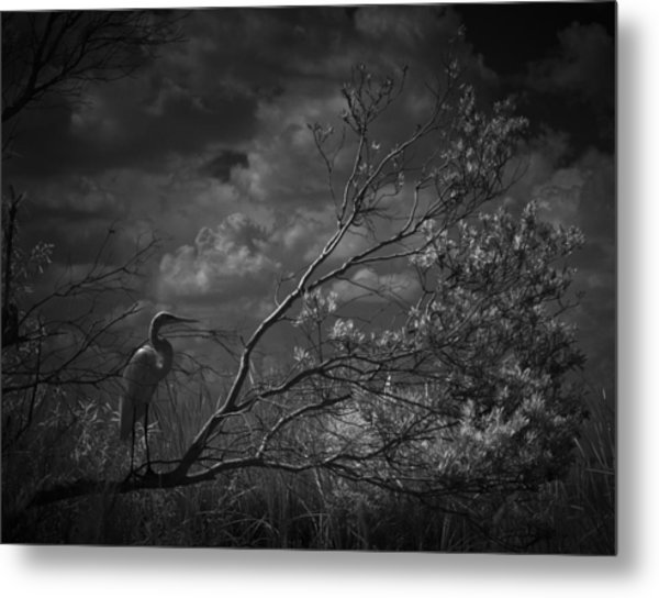 Loxahatchee Heron At Sunset Metal Print