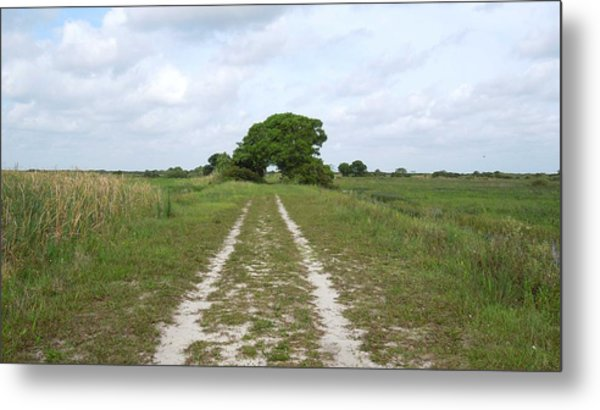 Loxahatchee Wildlife Refuge Metal Print