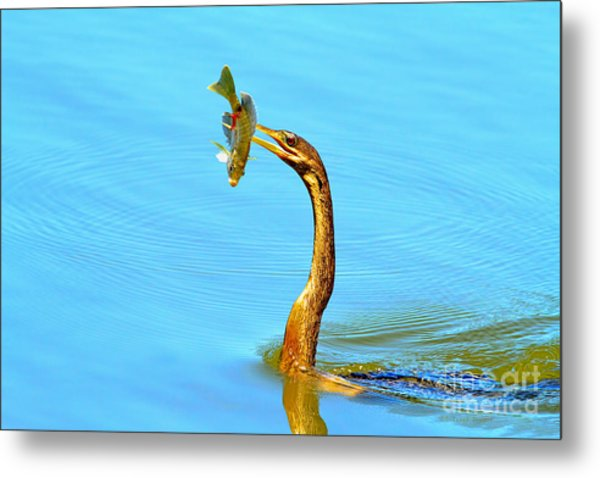 Lunch On The Spear Metal Print