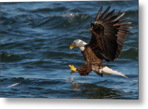 Lunch Time  Metal Print by Glenn Lawrence