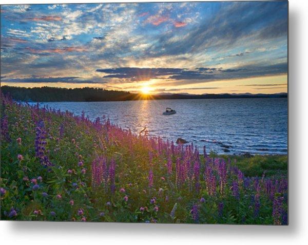 Lupine Sunset On Long Lake Metal Print