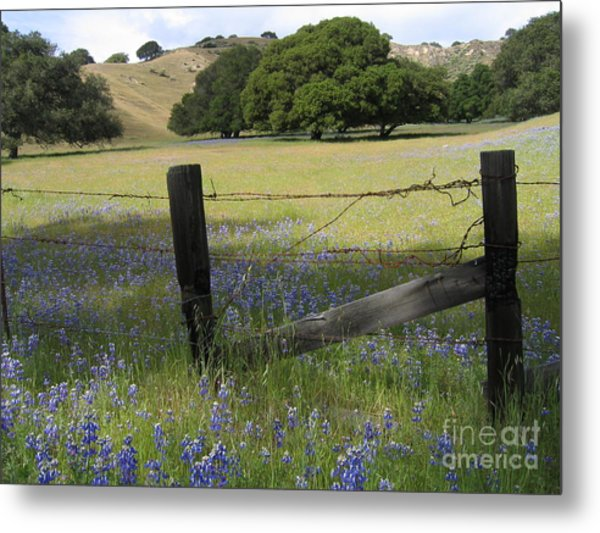 Lupines And Oaks Metal Print