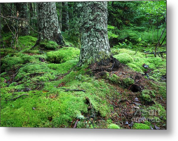 Lush Forest Metal Print by Alan Russo