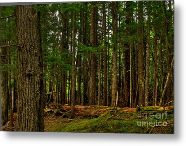 Lush Green Forest Metal Print