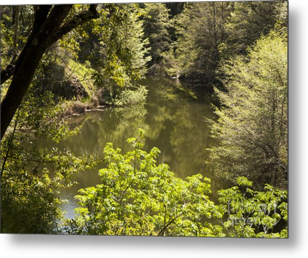 Lush Lake  Metal Print by Juan Romagosa