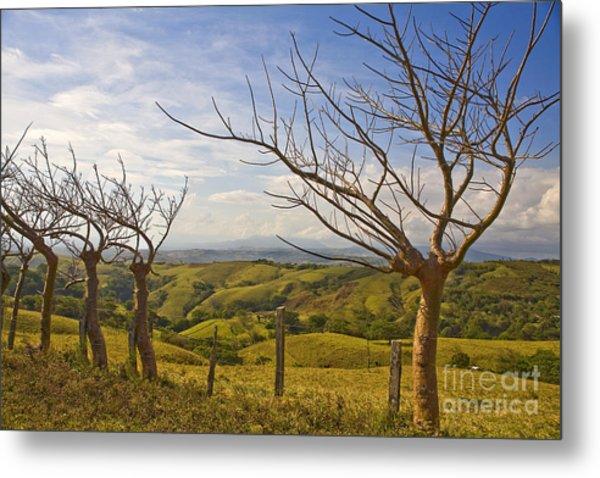 Lush Land Leafless Trees 2 Metal Print