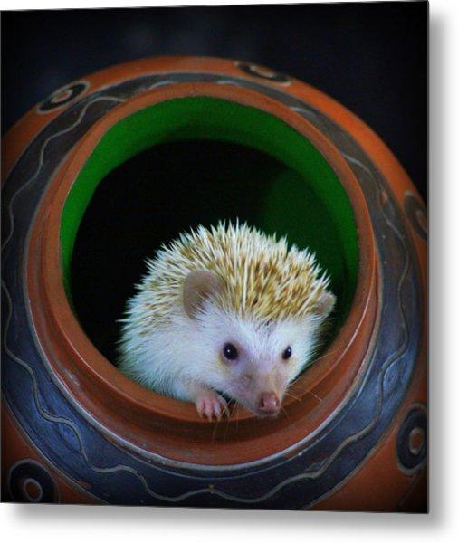 Lyla The Hedgehog Metal Print