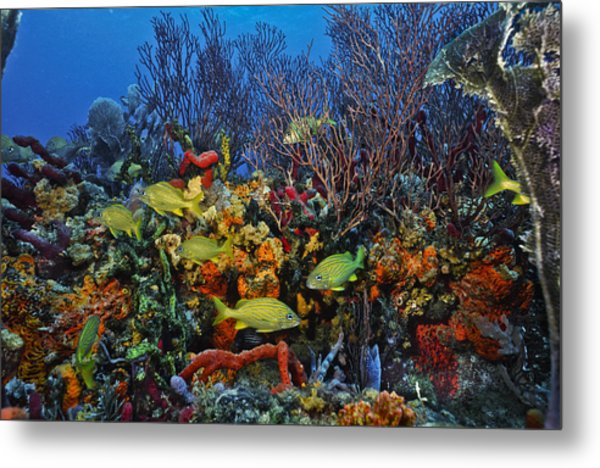 Lynns Reef On A Perfect Day Metal Print