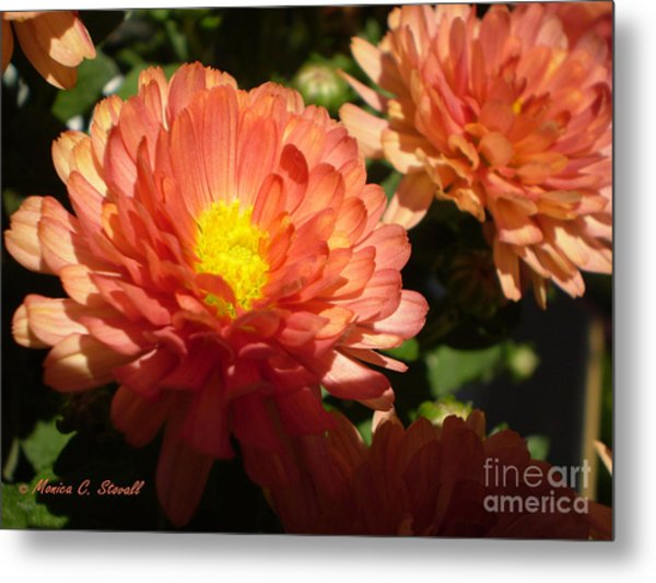 M Bright Orange Flowers Collection No. Bof1 Metal Print