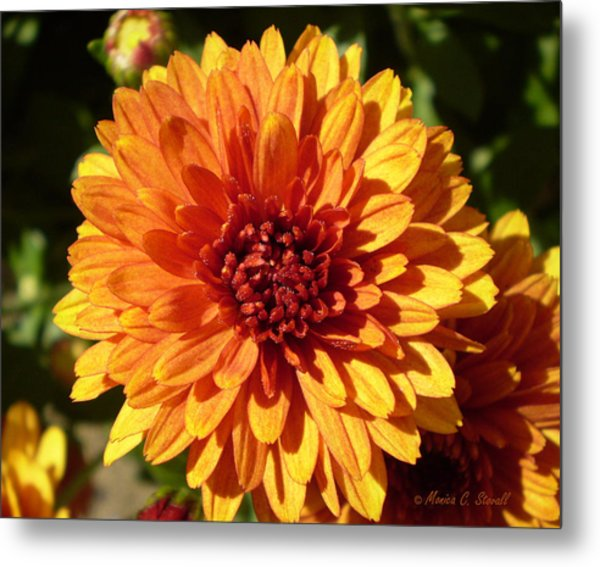 M Bright Orange Flowers Collection No. Bof3 Metal Print