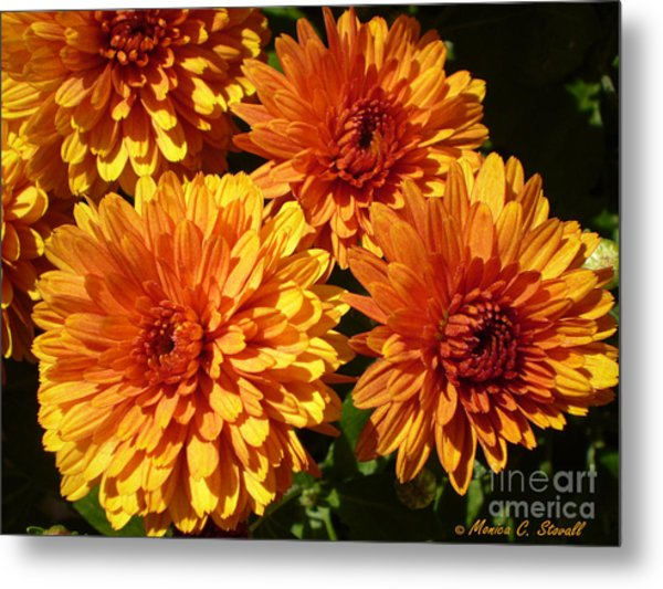M Bright Orange Flowers Collection No. Bof4 Metal Print