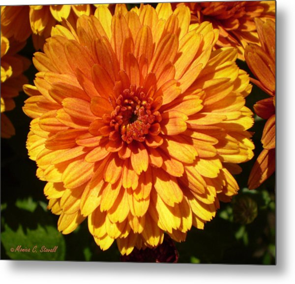 M Bright Orange Flowers Collection No. Bof5 Metal Print