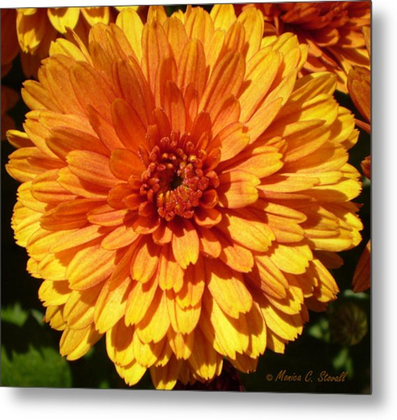 M Bright Orange Flowers Collection No. Bof7 Metal Print
