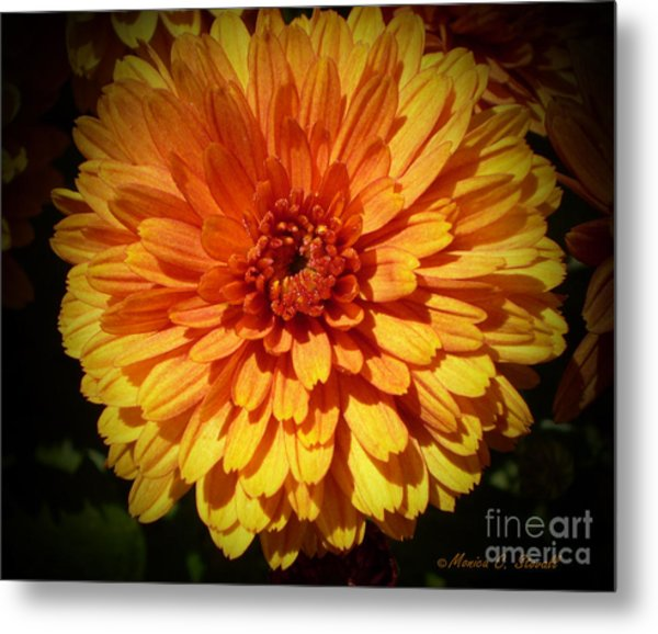 M Bright Orange Flowers Collection No. Bof8 Metal Print