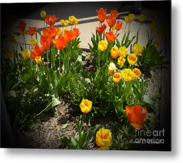 M Color Combination Flowers Collection No. Cc10 Metal Print