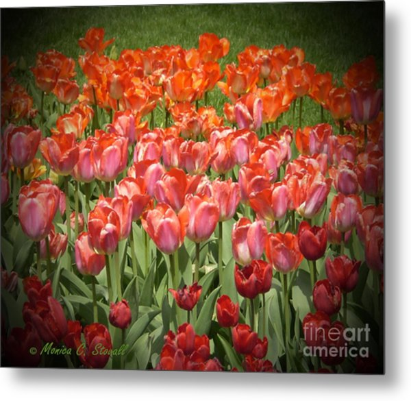 M Color Combination Flowers Collection No. Cc12 Metal Print