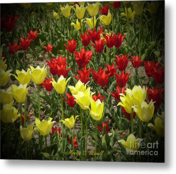 M Color Combination Flowers Collection No. Cc2 Metal Print