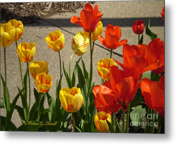 M Color Combination Flowers Collection No. Cc4 Metal Print