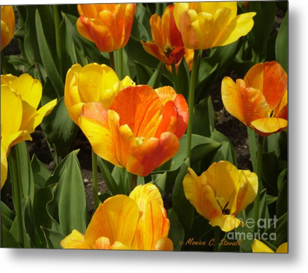 M Color Combination Flowers Collection No. Cc7 Metal Print