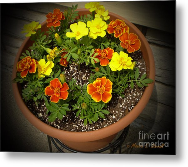 M Color Combination Flowers Collection No. Cc8 Metal Print