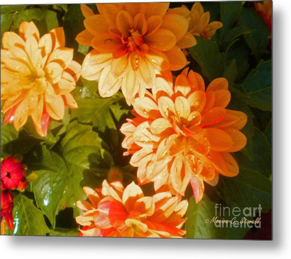 M Shades Orange Flowers Collection No. O3 Metal Print
