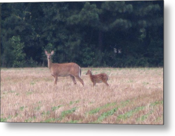 Mable The Female Deer With Harriet The Baby Fawn Metal Print by Debbie Nester