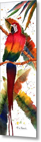 Macaw Feathers Metal Print by Patricia Novack