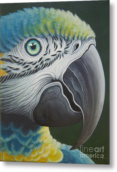 Macaw Head Metal Print