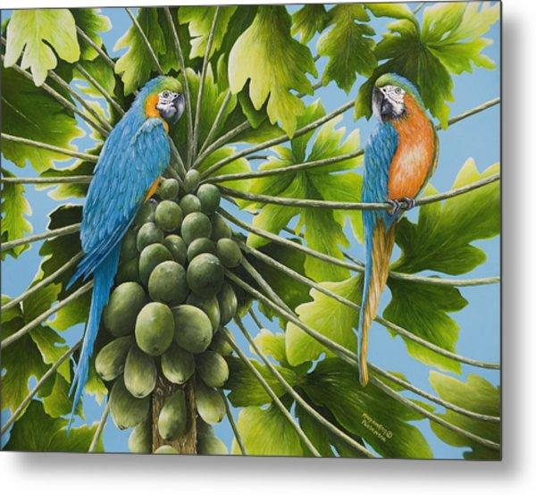 Macaw Parrots In Papaya Tree Metal Print