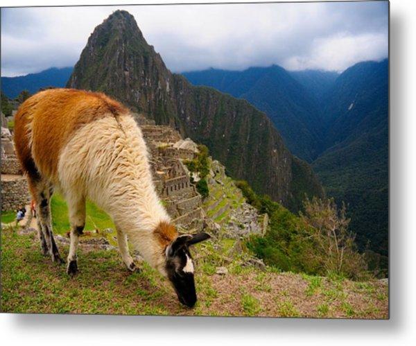 Machu Picchu Peru Metal Print by Max Ratchkauskas