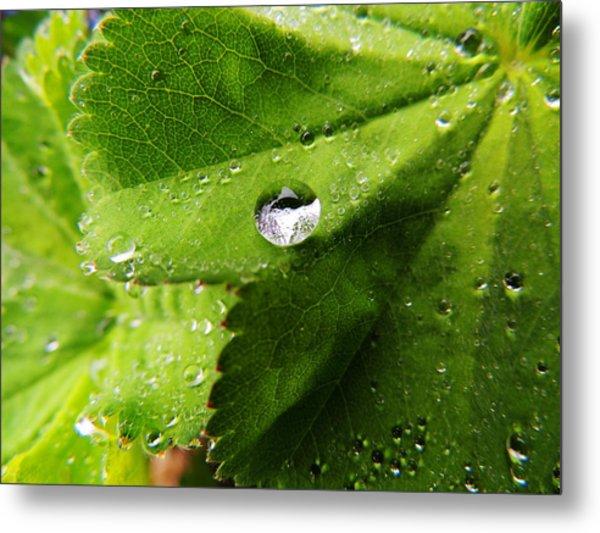 Macro Raindrop On Leaf Metal Print