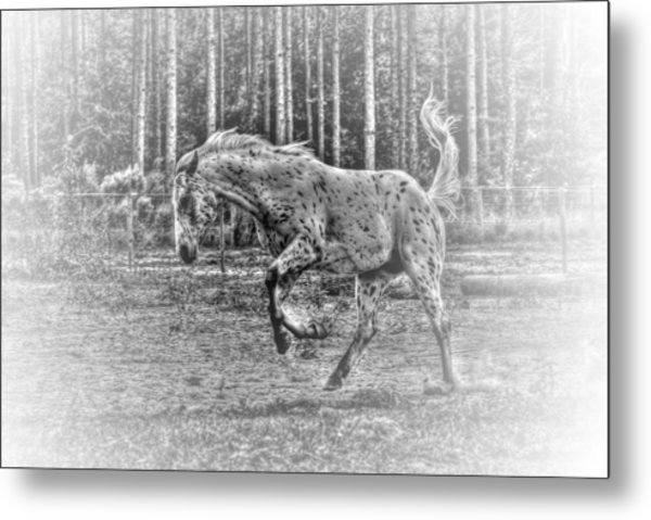 Mad Horse Metal Print