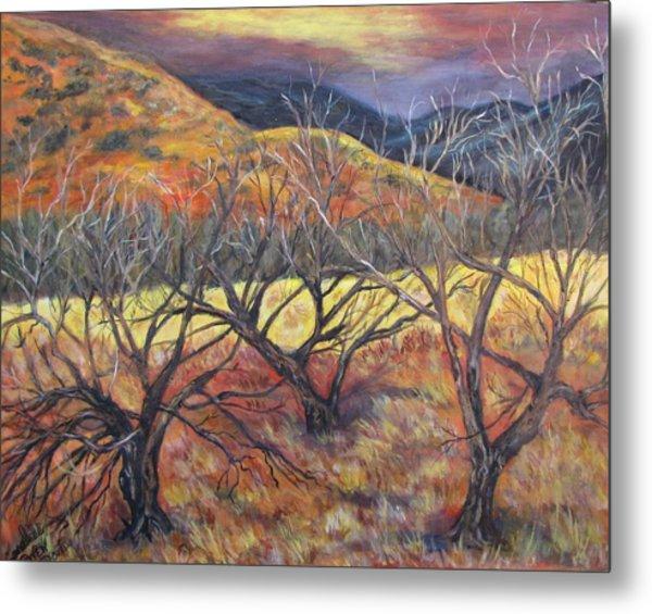 Madera Canyon 2 Metal Print by Caroline Owen-Doar