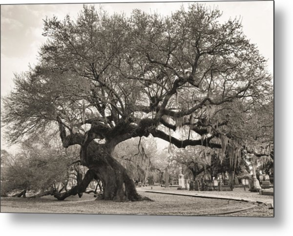 Magestic And Aged Metal Print