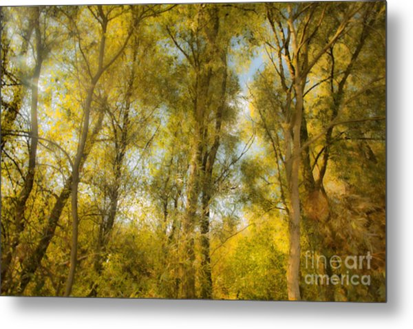 Magic Forest-4 Metal Print