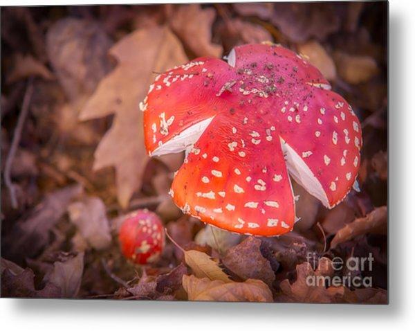 Magic Mushroom Metal Print