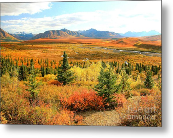 Magic Of Denali Metal Print