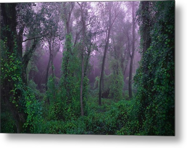 Magical Fairy Forest Metal Print