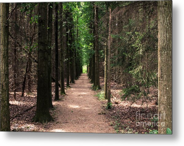 Magical Path Metal Print