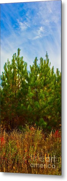 Magical Pines Metal Print