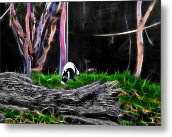 Walk In Magical Land Of The Black And White Ruffed Lemur Metal Print