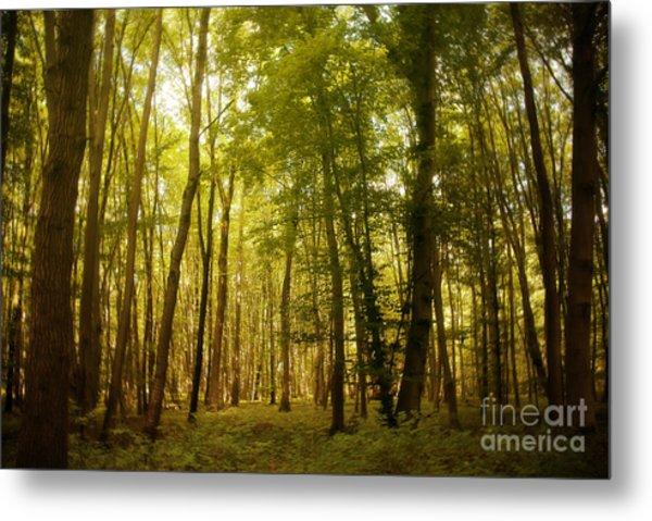 Magical Woodlands Metal Print