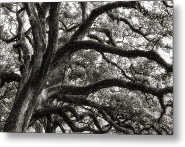 Magnificent Oaks Of Louisiana Metal Print