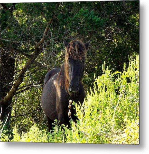 Magnificent Wild Horse Metal Print