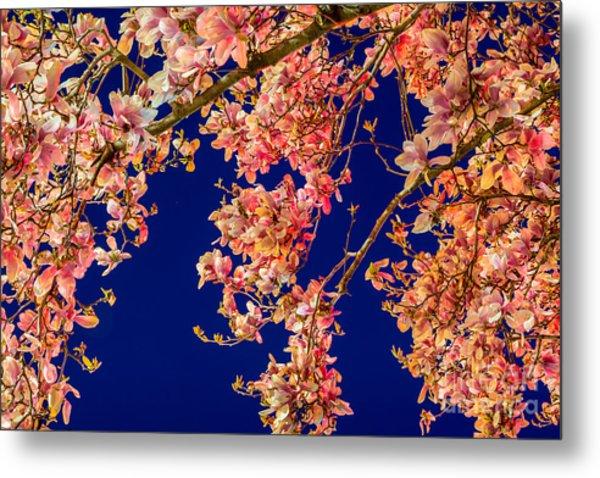 Magnolia - Redlight  Metal Print