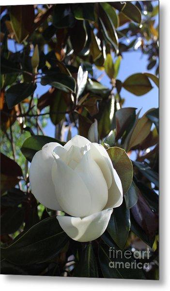 Magnolia Bloom Metal Print