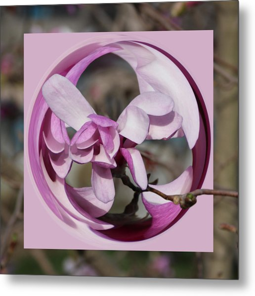 Metal Print featuring the photograph Magnolia Blossom Series 1301 by Jim Baker