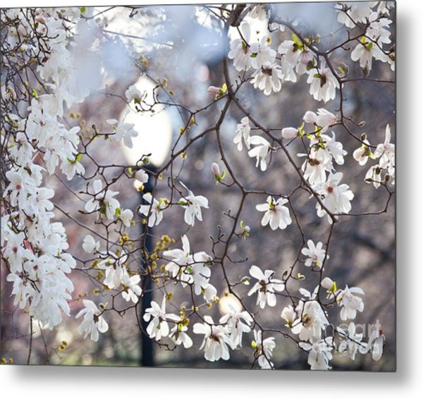 Magnolia Impression 2 Metal Print